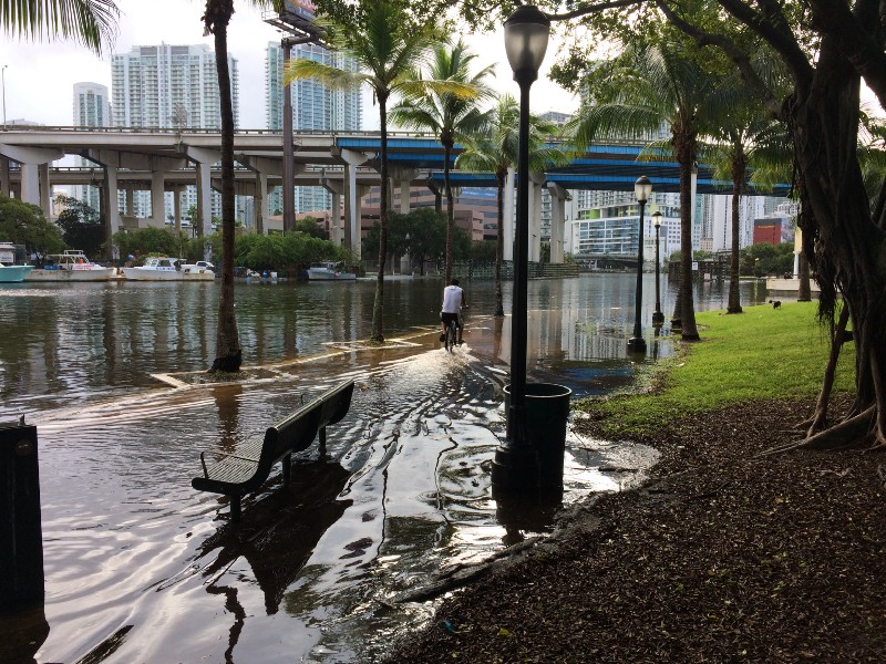 King tides, which typically arrive in the fall, are affecting low-lying areas of Miami-Dade County. PC: Katherine Hagemann